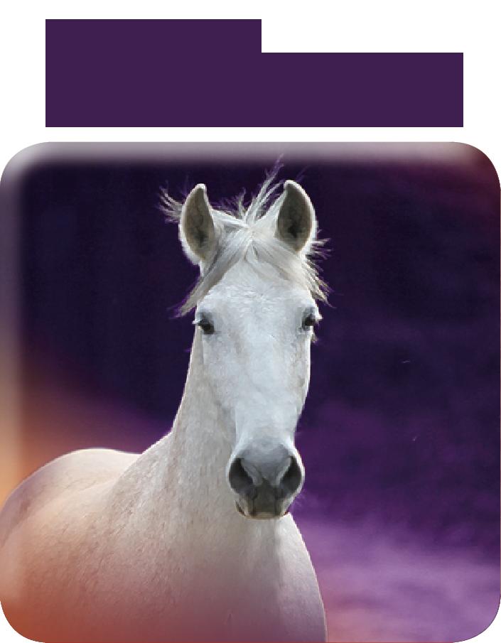 Horses Typo