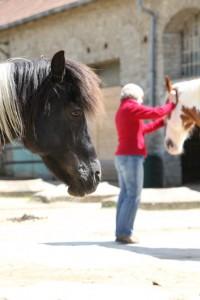 EponaQuest-Pferd-Mensch