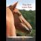Epona Pferdekalender 2017