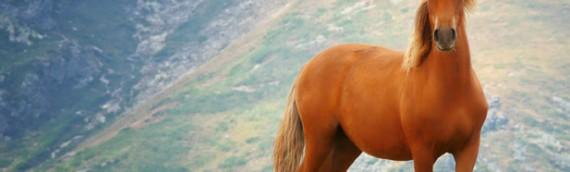 Jahresreise mit Pferden
