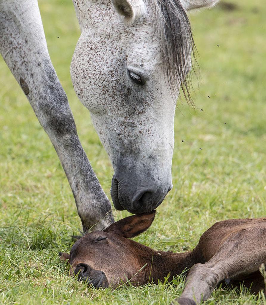 Liebevolle Verbindung zwischen Mutterstute und ihrem Fohlen