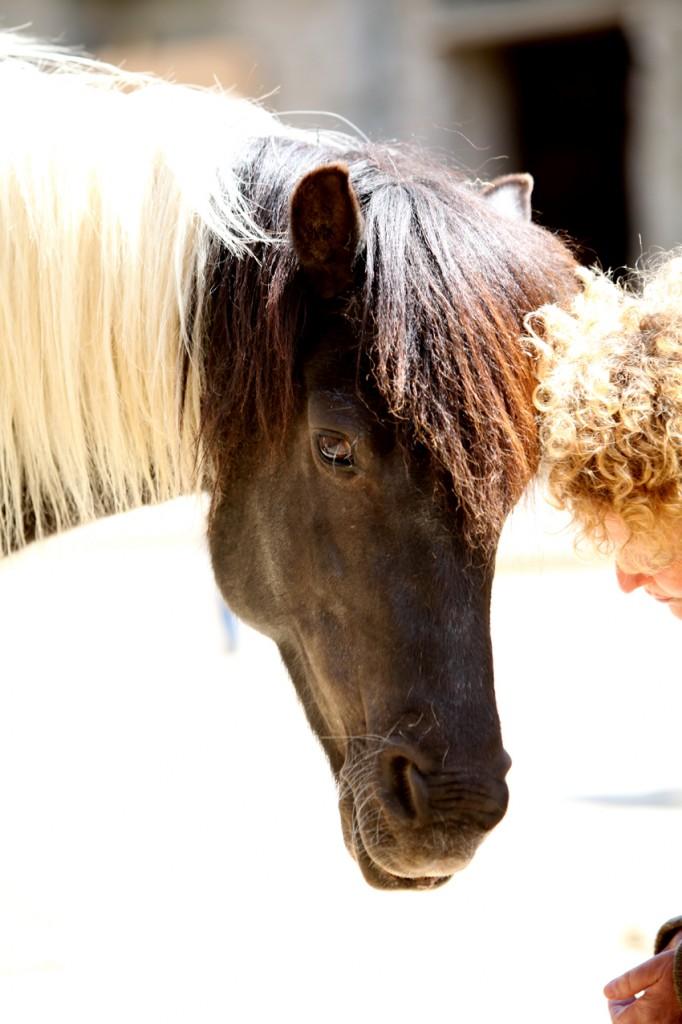 Pferdebegegnung_web