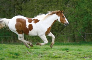 Pferd Waldwiese