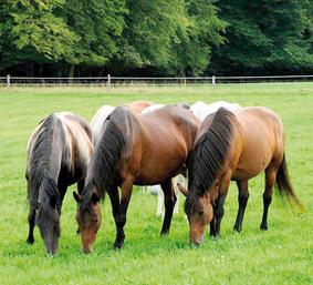 ml-pferde-004
