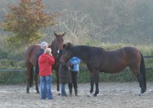 Systemeische-Aufstellungen-mit-Pferden