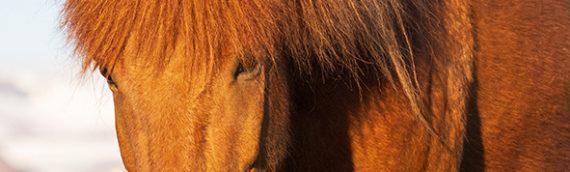 Pferd Kalender 2021