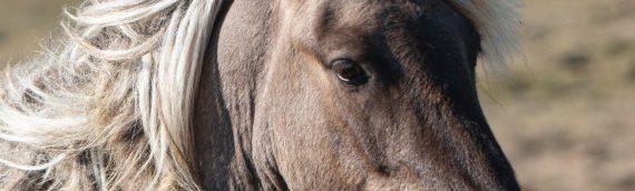 Pferde Spirit Kalender 2020, DIN A2 + A3